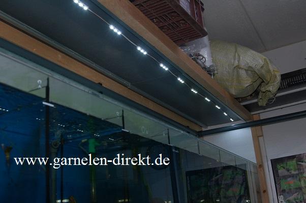 garnelen kaufen direkt aus der wirbellosen zucht von frank schenk led module. Black Bedroom Furniture Sets. Home Design Ideas